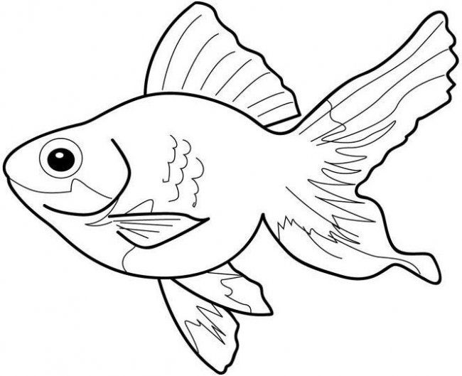 fish clip art coloring pages